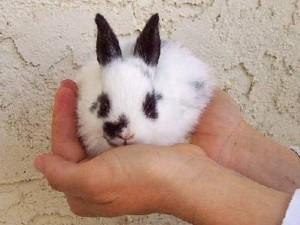 Bunny_20120403113933_640_480