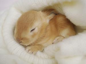 Pictures Of Baby Bunnies Hd 1080P 12 HD Wallpapers
