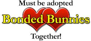 bonded-bunnies-logo