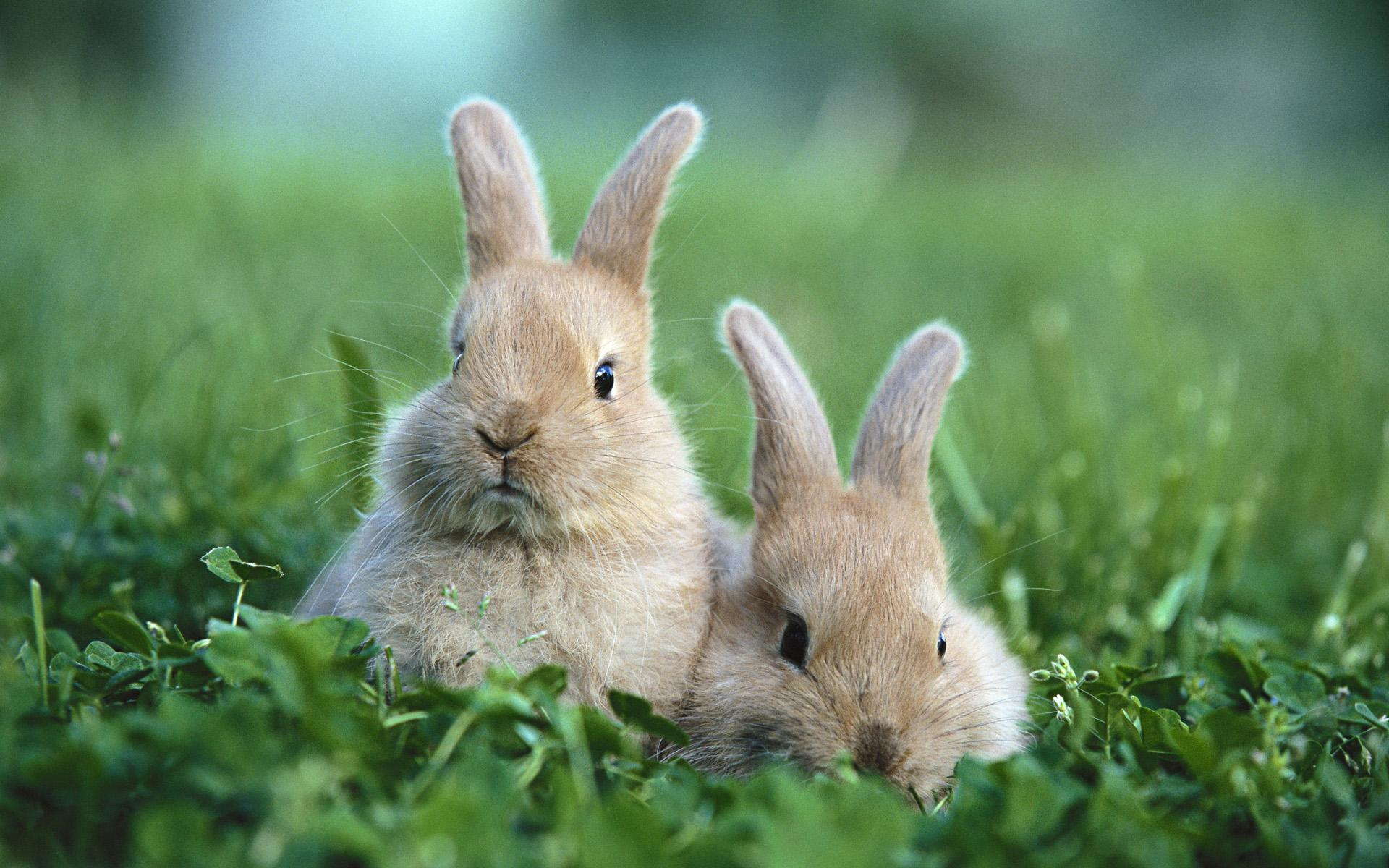 brambley hedge rabbit rescue phoenix rabbit shelterbrambley