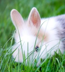 rabbit-268x300