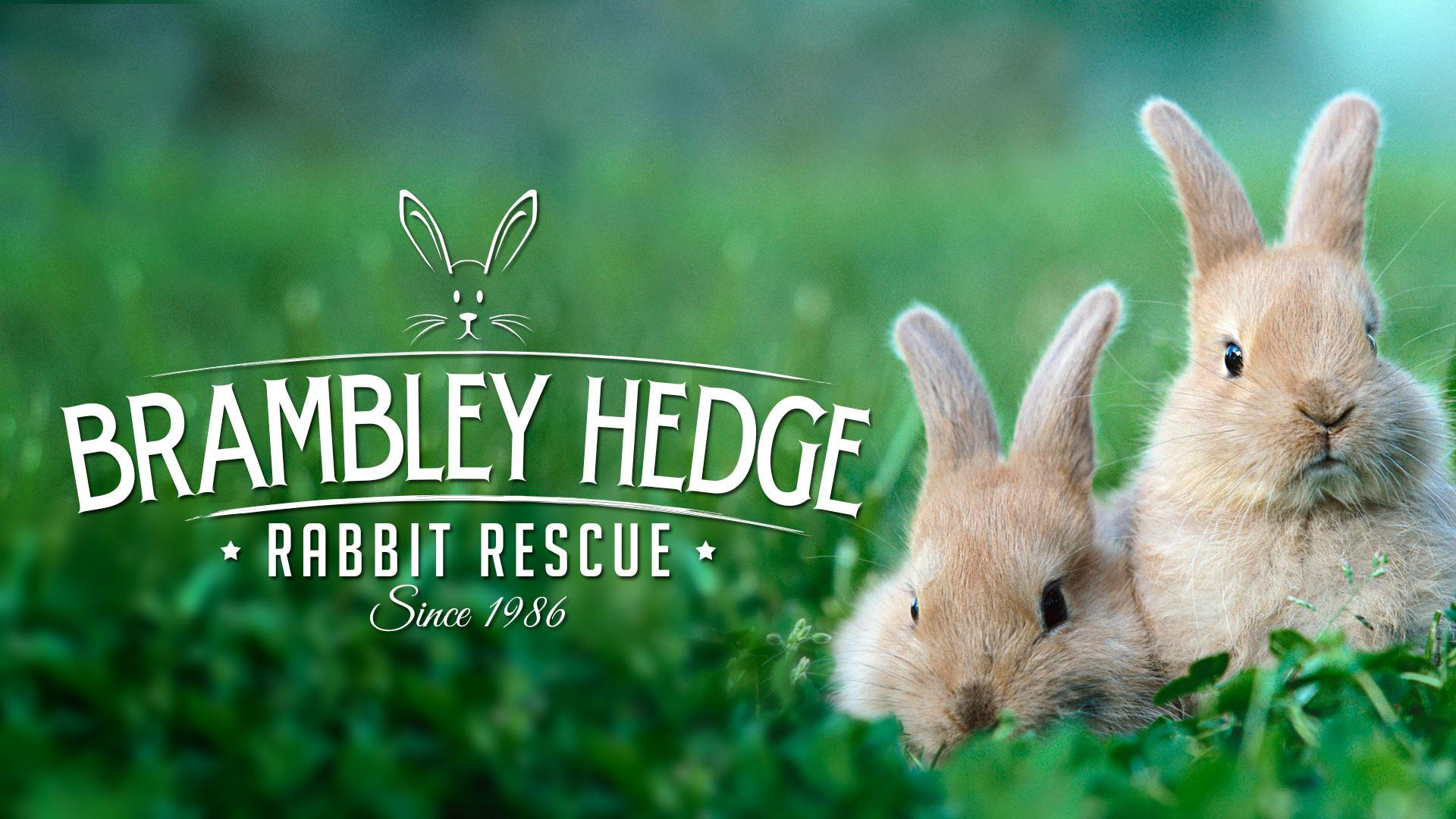 short essay about my pet rabbit Rabbit essay: an english essay on the rabbit for kids of class 1 to 3 the rabbit short essay for school students of grade 1, 2, 3 in english.